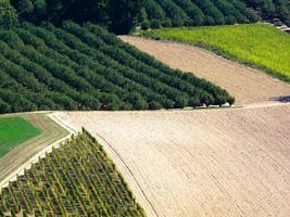 Vineyards in autumn photo