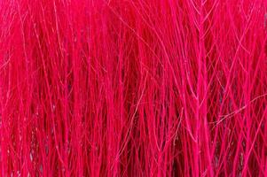 Red color of small dry twigs background photo