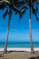 Coconut trees on beach with sky at Songkhla Province, Thailand photo