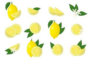 Set of illustrations with lemon exotic citrus fruits, flowers and leaves isolated on a white background. vector