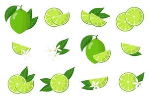 Set of illustrations with lime exotic citrus fruits, flowers and leaves isolated on a white background. vector