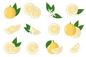 Set of illustrations with sweetie exotic citrus fruits, flowers and leaves isolated on a white background. vector