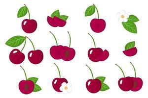 conjunto de ilustraciones con cerezas frutas exóticas, flores y hojas aisladas sobre fondo blanco. vector