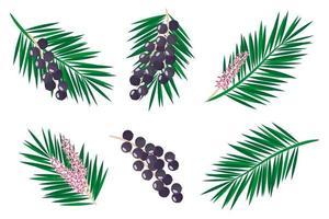 conjunto de ilustraciones con frutas exóticas de acai, flores y hojas aisladas sobre fondo blanco. vector