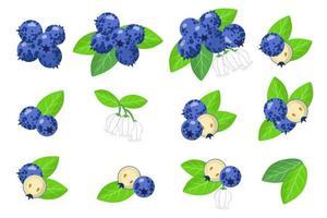 conjunto de ilustraciones con frutas exóticas de arándanos, flores y hojas aisladas sobre fondo blanco. vector