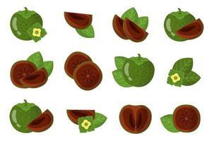 conjunto de ilustraciones con frutas exóticas de zapote negro, flores y hojas aisladas sobre fondo blanco. vector