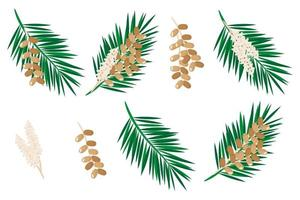 Set of illustrations with date fruit exotic fruits, flowers and leaves isolated on a white background. vector