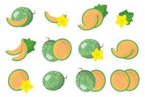 conjunto de ilustraciones con frutas exóticas de cucumis melo, flores y hojas aisladas sobre fondo blanco. vector