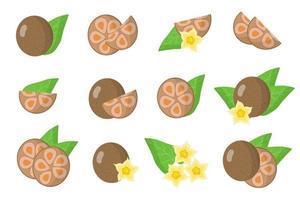 conjunto de ilustraciones con frutas exóticas de monje, flores y hojas aisladas sobre fondo blanco. vector