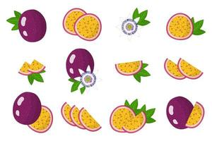 Set of illustrations with Passionfruit exotic fruits, flowers and leaves isolated on a white background. vector