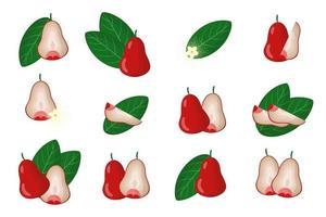 conjunto de ilustraciones con frutas exóticas de manzana rosa, flores y hojas aisladas sobre fondo blanco. vector