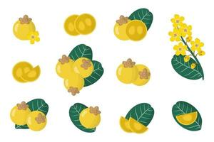 Set of illustrations with Nance exotic fruits, flowers and leaves isolated on a white background. vector