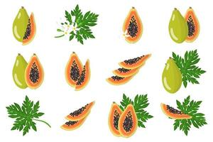 Set of illustrations with Papaya exotic fruits, flowers and leaves isolated on a white background. vector