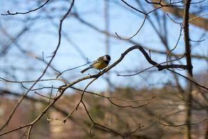 Bird on a branch photo