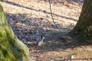 Squirrel sitting near a tree photo