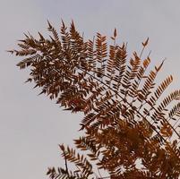 hojas de helecho contra el cielo foto