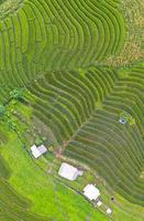 Aerial view of the green terraced rice fields photo