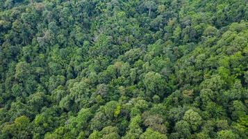 Aerial top view of forest texture background view from above photo