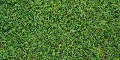 Green grass background photo