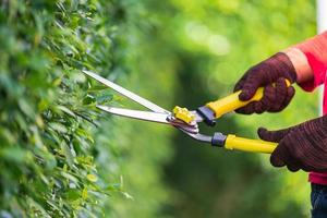 Pruning of ornamental trees at home in morning photo