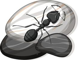 Top view of black ant on a stone on white background vector