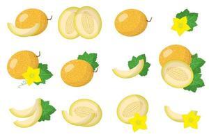 conjunto de ilustraciones con frutas exóticas de melón, flores y hojas aisladas sobre fondo blanco. vector