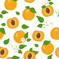 Vector cartoon seamless pattern with Prunus armeniaca or Apricot exotic fruits, flowers and leafs on white background