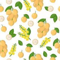 Vector de dibujos animados de patrones sin fisuras con frutas exóticas, flores y hojas de uva birmana o baccaurea sobre fondo blanco