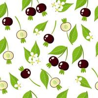 Vector cartoon seamless pattern with Grumichama cherry exotic fruits, flowers and leafs on white background