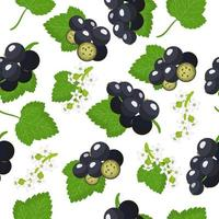 Vector cartoon seamless pattern with Ribes nigrum or Blackcurrant exotic fruits, flowers and leafs on white background
