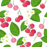 Vector cartoon seamless pattern with Muntingia calabura or Capulin exotic fruits, flowers and leafs on white background