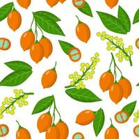 Vector de dibujos animados de patrones sin fisuras con bunchosia argentea frutas exóticas frutas, flores y hojas sobre fondo blanco.