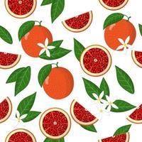 Vector de dibujos animados de patrones sin fisuras con Citrus sinensis o naranja sangre frutas exóticas flores y hojas sobre fondo blanco.