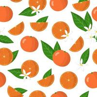 Vector cartoon seamless pattern with Citrus clementina or Clementine exotic fruits flowers and leafs on white background