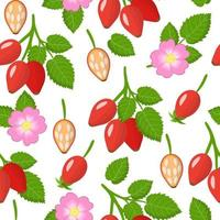 Vector cartoon seamless pattern with Dogrose or Rosa rubiginosa exotic fruits, flowers and leafs on white background