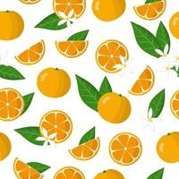 Vector cartoon seamless pattern with Calamondin or Citrofortunella exotic fruits, flowers and leafs on white background