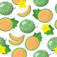 Vector de dibujos animados de patrones sin fisuras con cantalupensis o cucumis melo frutas exóticas, flores y hojas sobre fondo blanco.