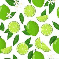 Vector de dibujos animados de patrones sin fisuras con cítricos aurantiifolia o lima frutas exóticas flores y hojas sobre fondo blanco.