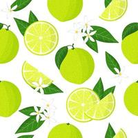 Vector cartoon seamless pattern with Citrus limetta or sweet lime exotic fruits, flowers and leafs on white background