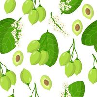 Vector cartoon seamless pattern with Terminalia or Kakadu plum exotic fruits, flowers and leafs on white background