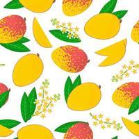 Vector de dibujos animados de patrones sin fisuras con mangifera indica o mango frutas exóticas, flores y hojas sobre fondo blanco.