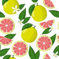 Vector cartoon seamless pattern with Citrus maxima or Pomelo exotic fruits, flowers and leafs on white background