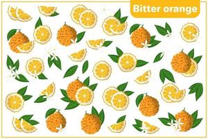 Set of vector cartoon illustrations with whole, half, cut slice Bitter orange exotic fruits, flowers and leaves isolated on white background