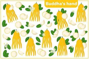 Set of vector cartoon illustrations with whole, half, cut slice Buddha's hand exotic fruits, flowers and leaves isolated on white background