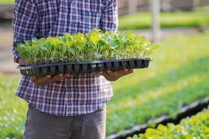 Agricultor asiático sosteniendo plántulas jóvenes en su granja en el huerto foto