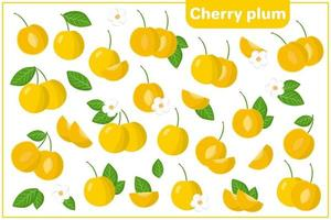 Set of vector cartoon illustrations with Cherry Plum exotic fruits, flowers and leaves isolated on white background