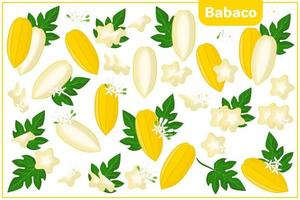 Set of vector cartoon illustrations with Babaco exotic fruits, flowers and leaves isolated on white background