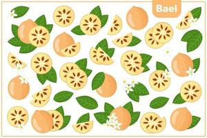 Set of vector cartoon illustrations with Bael exotic fruits, flowers and leaves isolated on white background