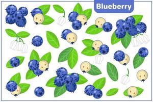 Conjunto de ilustraciones de dibujos animados vectoriales con frutas exóticas de arándanos, flores y hojas aisladas sobre fondo blanco vector