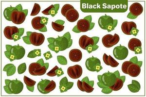 Conjunto de ilustraciones de dibujos animados vectoriales con frutas exóticas de zapote negro, flores y hojas aisladas sobre fondo blanco vector